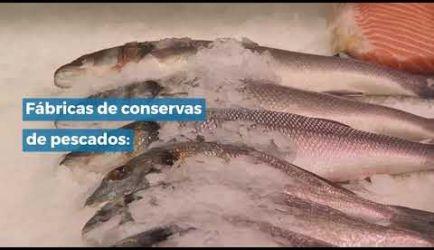 Estudiar a Distancia para ser Elaborador de Conservas de Productos de la Pesca: salidas laborales en las que ejercerás