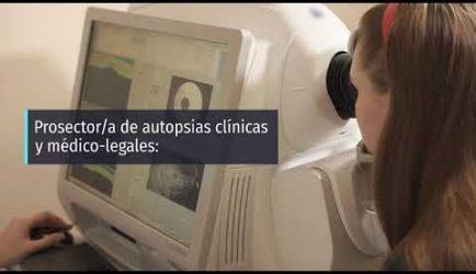 Estudiar la Formación Profesional de Anatomía Patológica y Citología: salidas laborales que encontrarás
