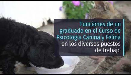 Formación de Psicología Canina y Felina: salidas profesionales en las que ejercerás