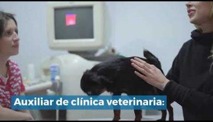 Las salidas profesionales en las que podrás ejercer al titularte de Auxiliar Veterinario