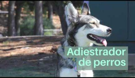¿Dónde puede ejercer sus funciones un titulado a Distancia el Curso de Adiestramiento Canino Obediencia Básica? Te damos toda la información