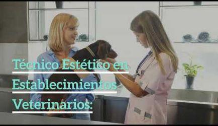 Curso de Peluquería y Estética Canina: salidas laborales en las que ejercerás